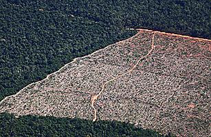 Brazil Deforest