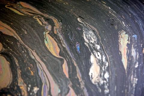 San Francisco Oil Spill 2007