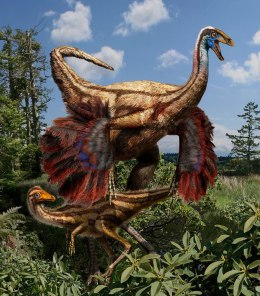 An artist's reconstruction of the feathered ornithomimid dinosaurs found in Alberta.