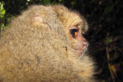top10_newspecies_monkey
