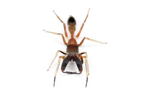 top10_newspecies_spiderfang