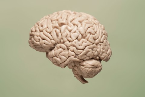 146104159aFloating brain on green background