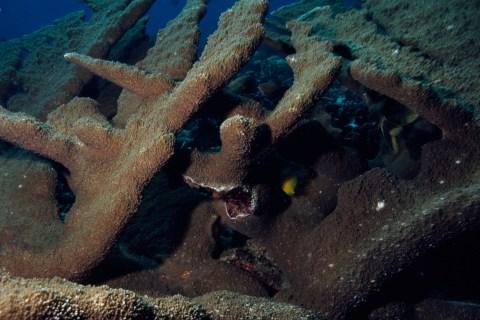 Dead coral.