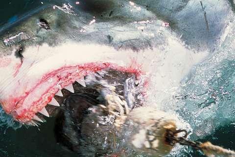 120313-shark-attacks