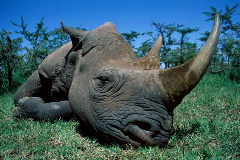 141301-black-rhino-poaching