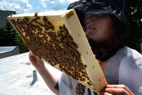 140213-urban-beekeeping